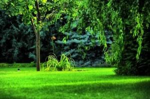 Удобрения для рулонного газона в Одессе