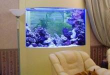 Декорирование и оформление аквариума