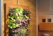 Вертикальное озеленение интерьера