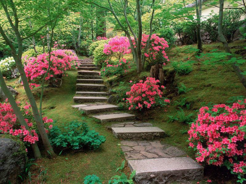 Цветочные композиции в саду в одессе