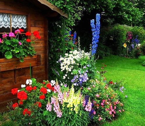 Создание палисадника на садовом участке в Одессе