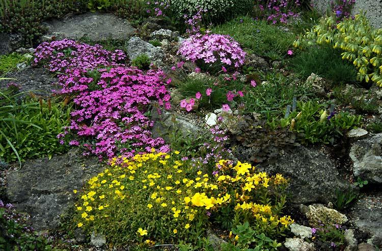 Альпинарии и рокарии на садовом участке в Одессе