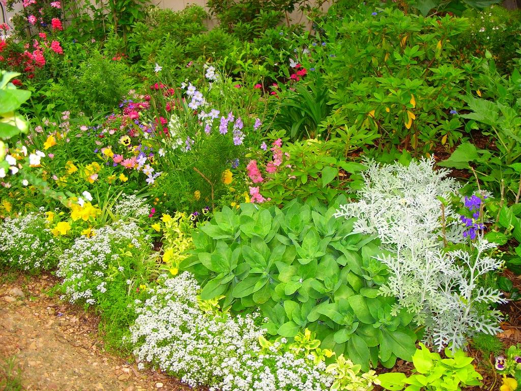 Создание цветника на садовом участке в Одессе