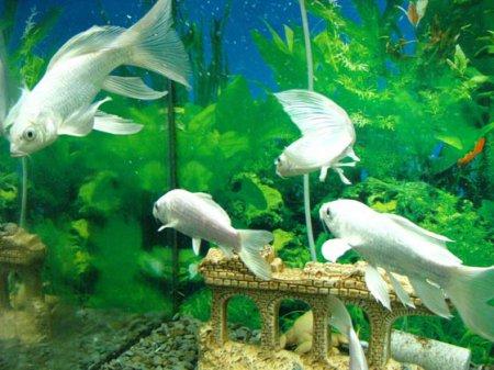 Дизайн аквариумов в Одессе
