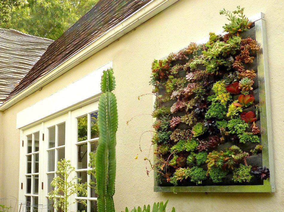 Вертикальный сад своими руками фото