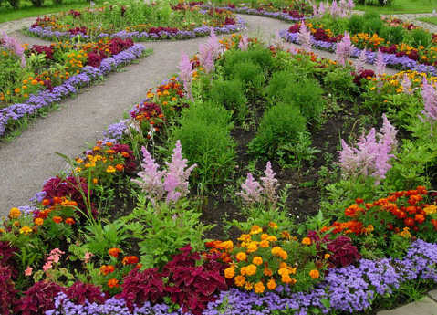 Миксбордер на садовом участке в Одессе