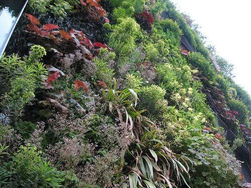 Дизайн растениями фасадов зданий