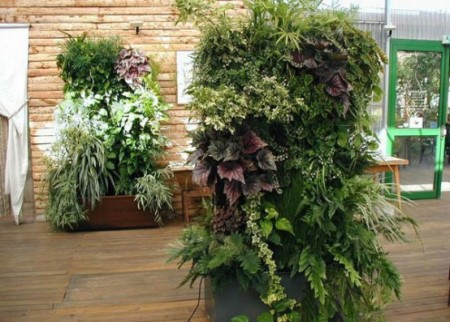 Вертикальное озеленение в Одессе