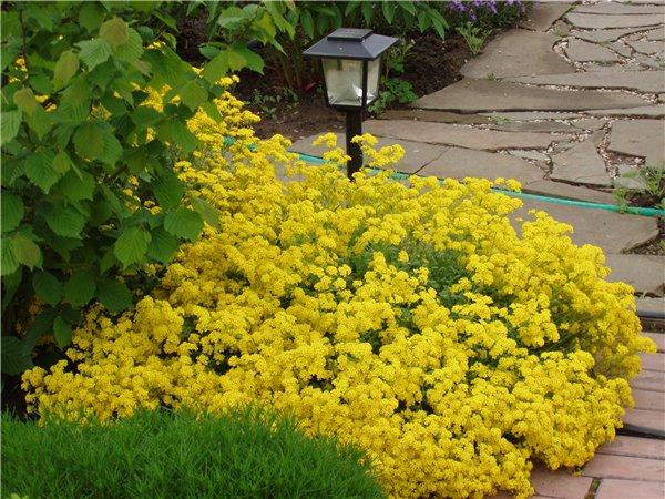 Растения для сада в Одессе