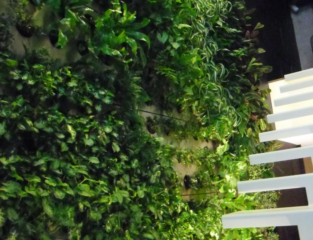 Вертикальное озеленение помещений в Одессе