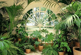Дизайн интерьера растениями в Одессе