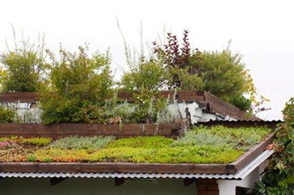 Озеленение крыш в Одессе