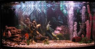 Оформление аквариумов в Одессе