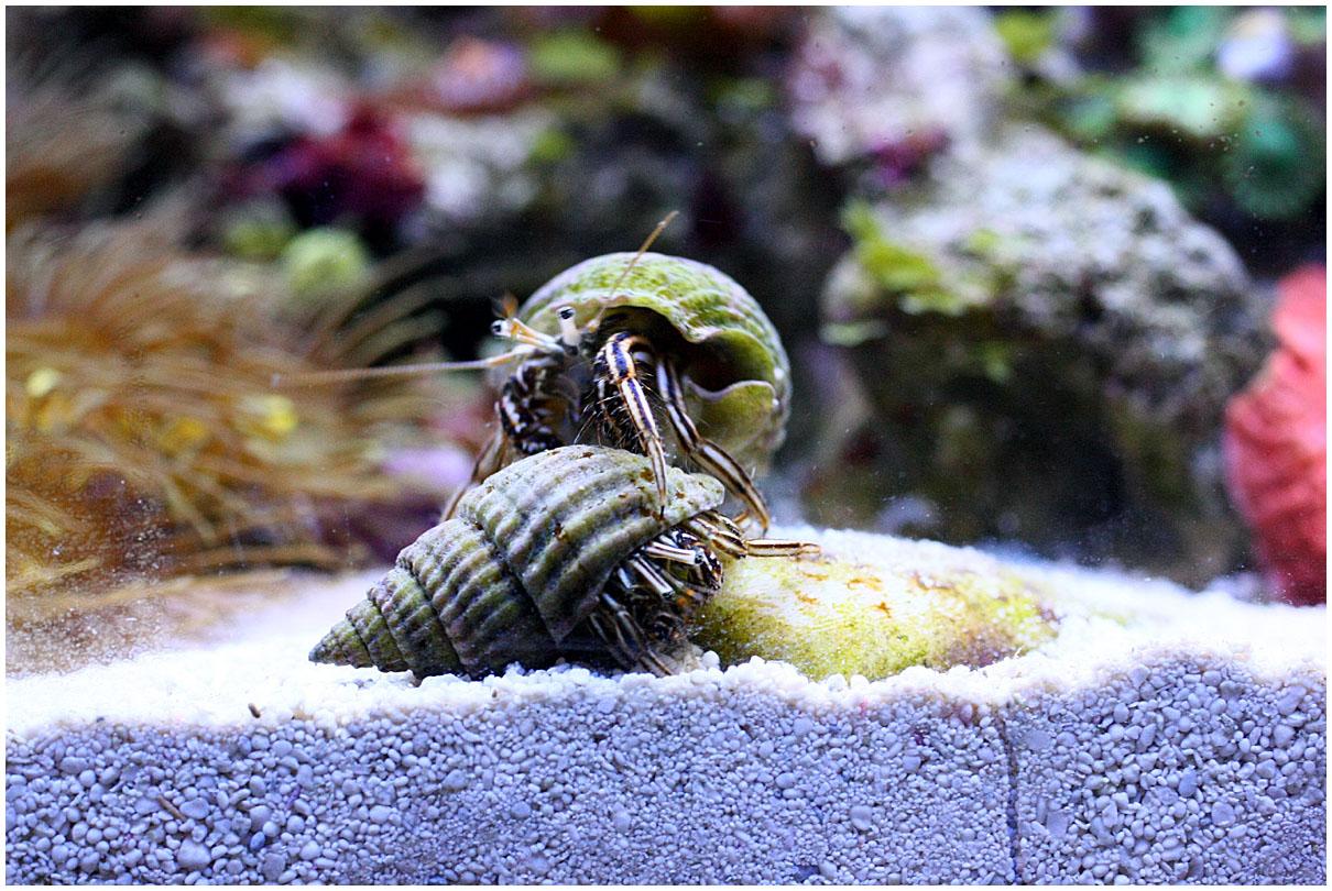 Какой выбрать морской аквариум