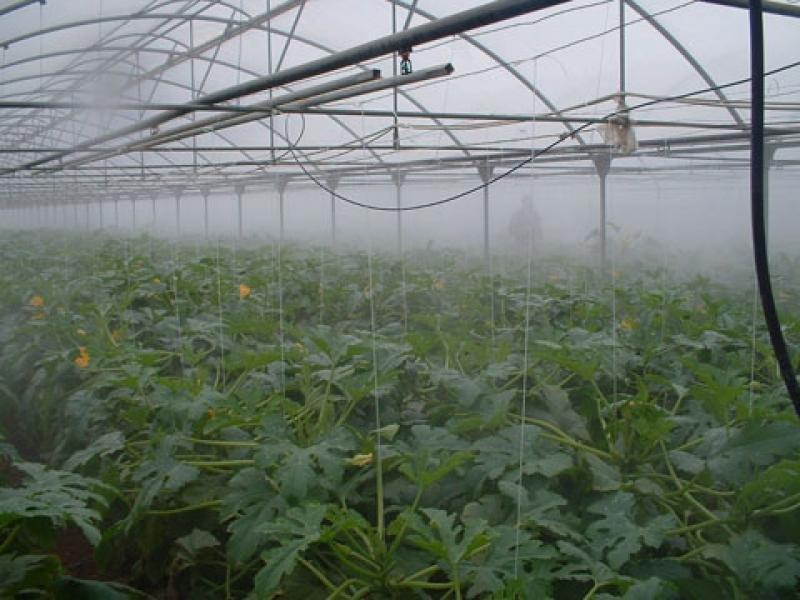 Система туманного охлаждения в тепличном хозяйстве