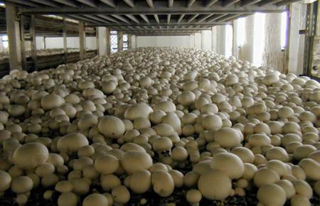 Система туманообразования для выращивания грибов