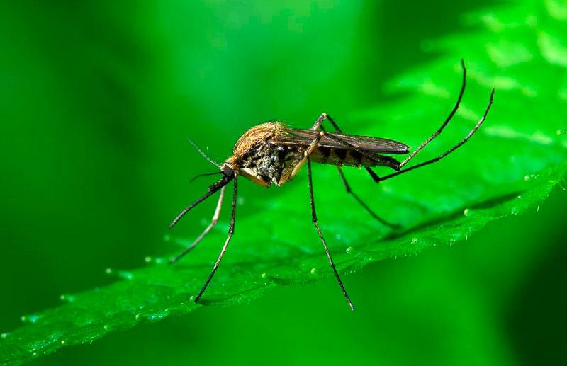 Защита от насекомых с помощью искусственного тумана