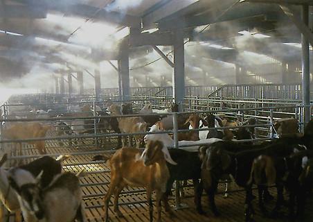 Охлаждение искусственным туманом в зоопарках