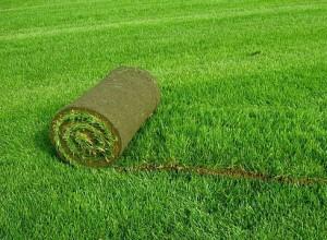 Рулонный газон в Одессе