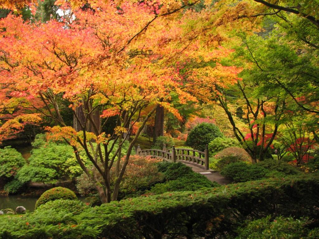 Создание японского сада в Одессе