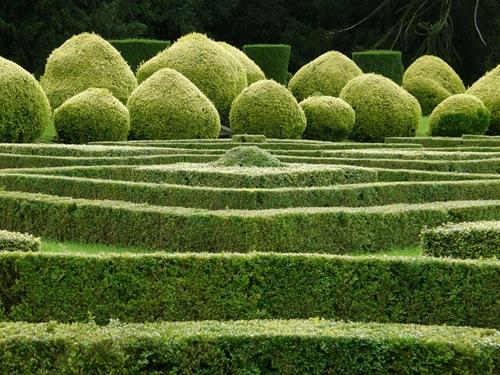 Озеленение садового участка в Одессе