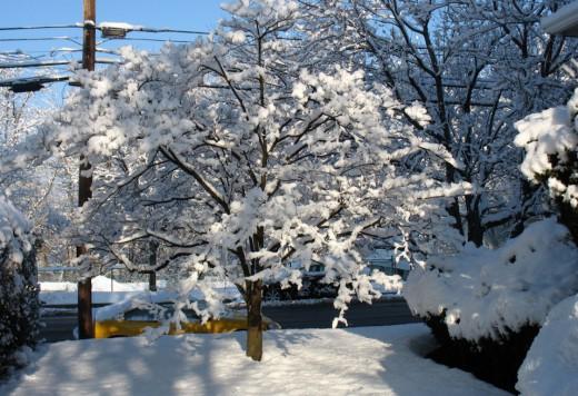 Дизайн ландшафта зимнего сада в Одессе