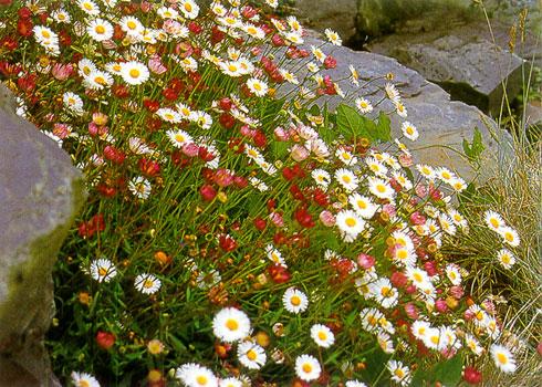 Растения для каменистых садов в Одессе