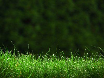 Газон, рулонный газон на садовом участке в Одессе