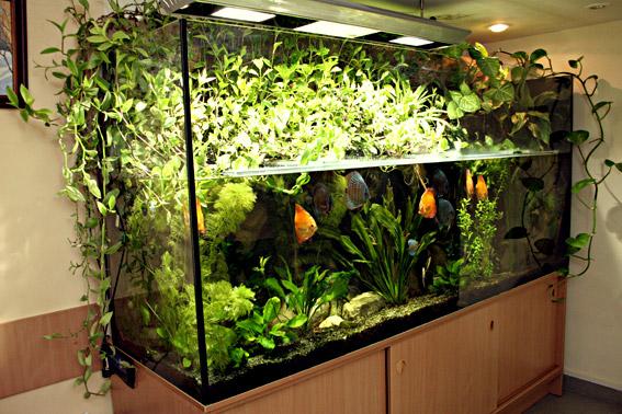 Виды декоративных аквариумов в Одессе
