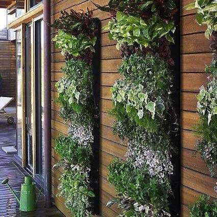 Дизайн растениями в Одессе