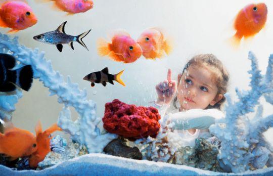 Различные виды аквариумов в Одессе