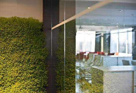 Вертикальные сады в интерьере зданий в Одессе