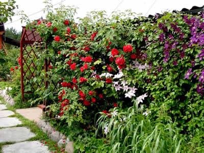Вертикальное озеленение садового участка в Одессе