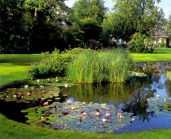 Искусственные водоемы на садовых участках в Одессе