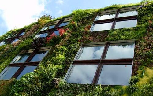 Вертикальное озеленение стен зданий