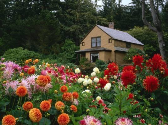 Клумбы и цветники на садовом участке в Одессе