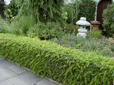 Зеленые бордюры на садовом участке в Одессе