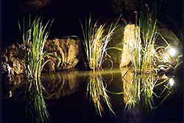 Освещение растительного водоема на садовом участке в Одессе