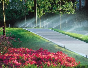 Система капельного полива для сада в Одессе