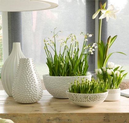 Растения в дизайне интерьера помещения в Одессе