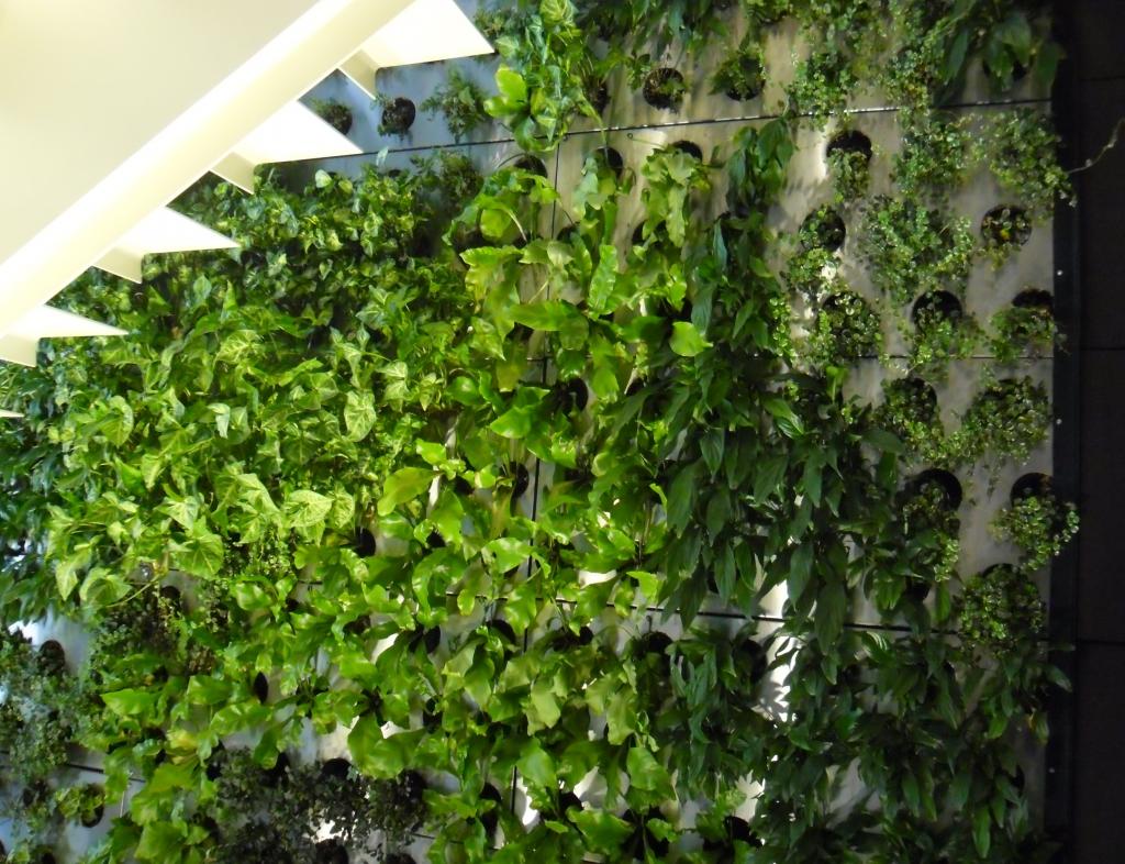 Вертикальное озеленение стен в Одессе