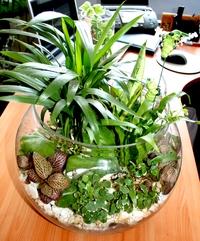 Растения в интерьере помещений в Одессе