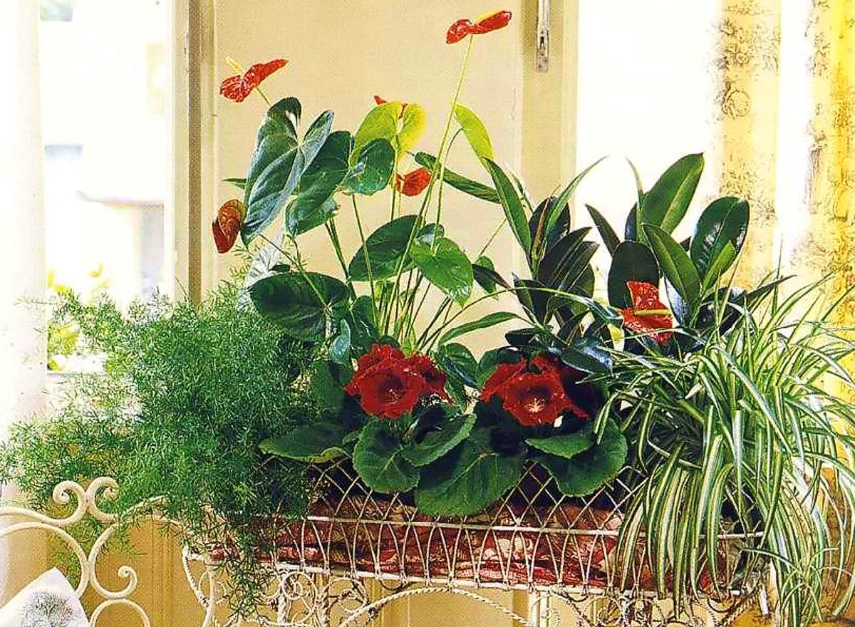 Комнатные растения в интерьере помещений в Одессе