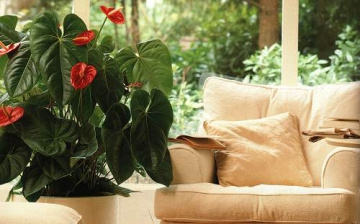 Дизайн растениями помещений в Одессе