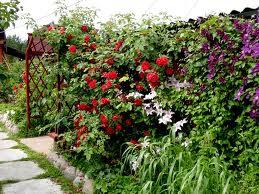 Озеленение садовых участков в Одессе