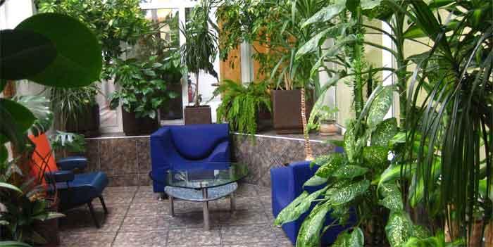 Озеленение офисов и зимние сады в Одессе