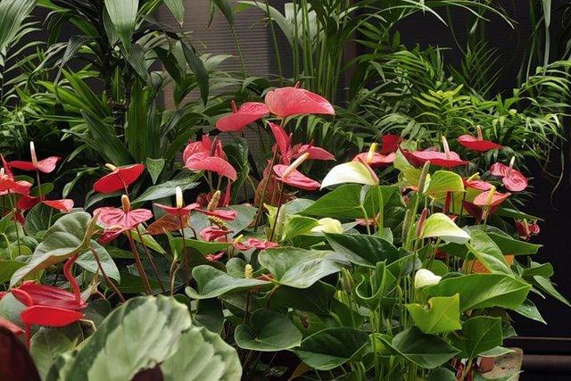 Растения в интерьере помещения