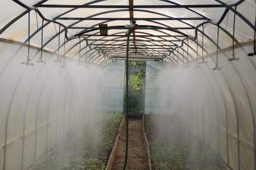 Система тумана в теплице