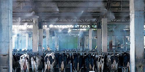 Системы туманообразования в животноводстве