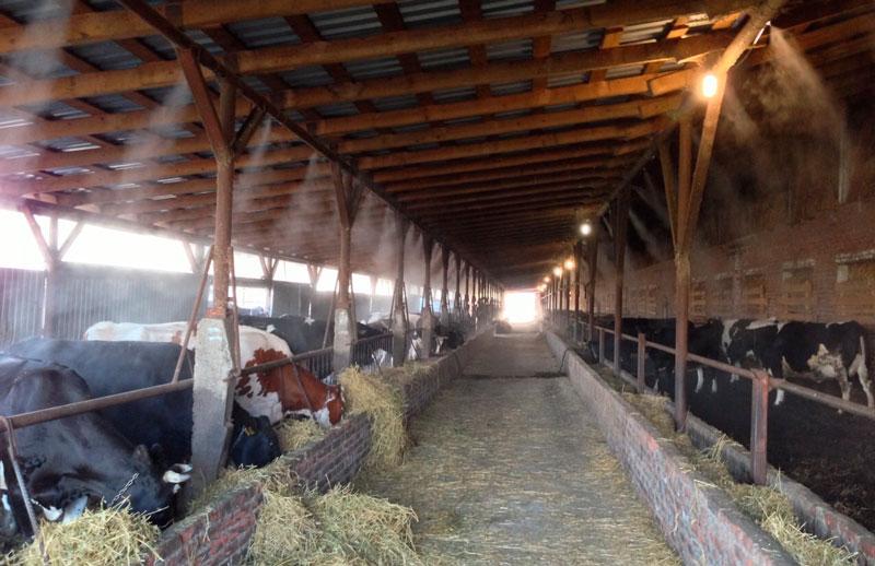 Применение систем туманообразования в животноводстве